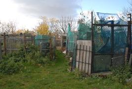 Stepney Farm Before