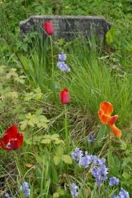 Nunhead Cemetery April 09 066